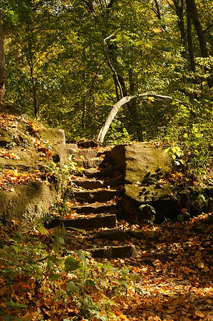 Stone Steps and Autumn Leaves at Turkey Run State Park  Photographer's Name: Morgan M. Elbert Photographer's City and State: Alexandria, IN