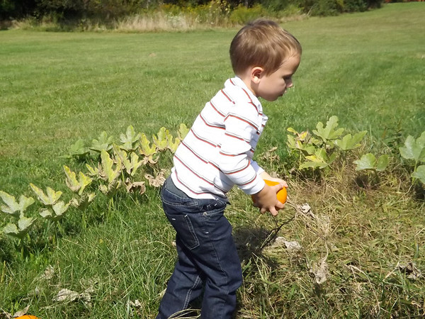 Picking pumpkins: Eli Coxe working at his after school job.<br /> <br /> Photographer's Name: J.R. Rosencrans<br /> Photographer's City and State: Alerxandria, Ind.