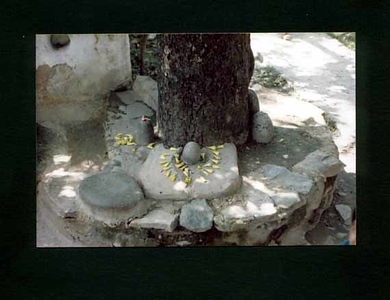 linga  under tree