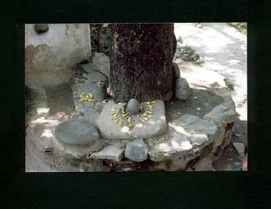 linga  under tree