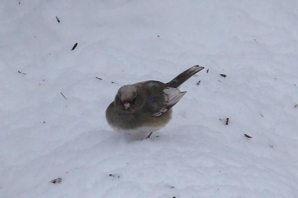 odd bird
