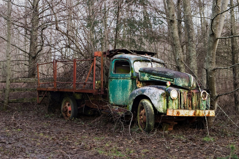 An old emerald green truck abandoned on a country road is shining from a spot of sunlight peeking throug the trees in the winter. This truck has been here so long that trees are growing up through the truck bed in back and lichen is growing on the front hood.