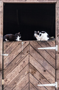 Stable door cats