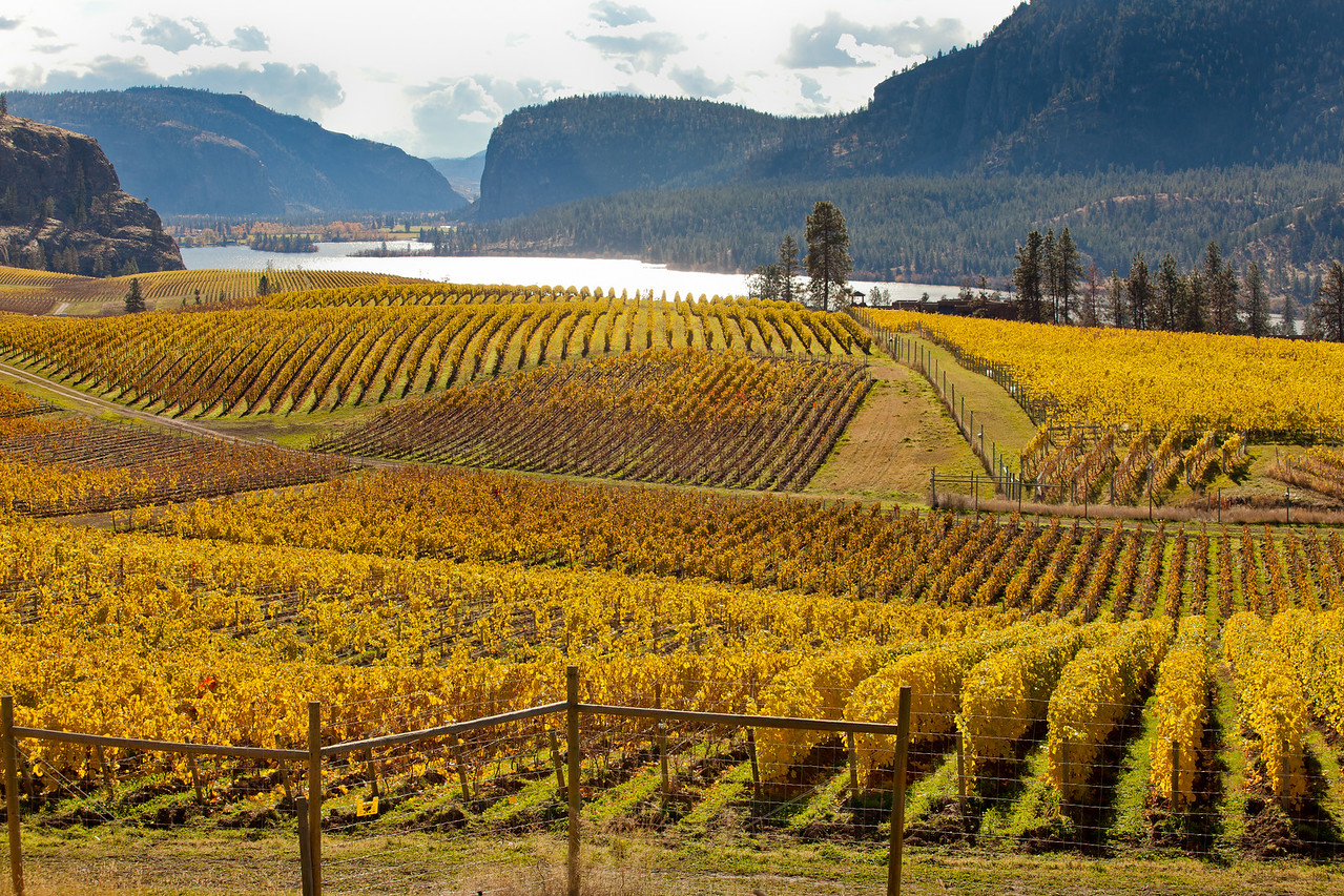 Fall Vineyards overlooking Vaseaux Lake.