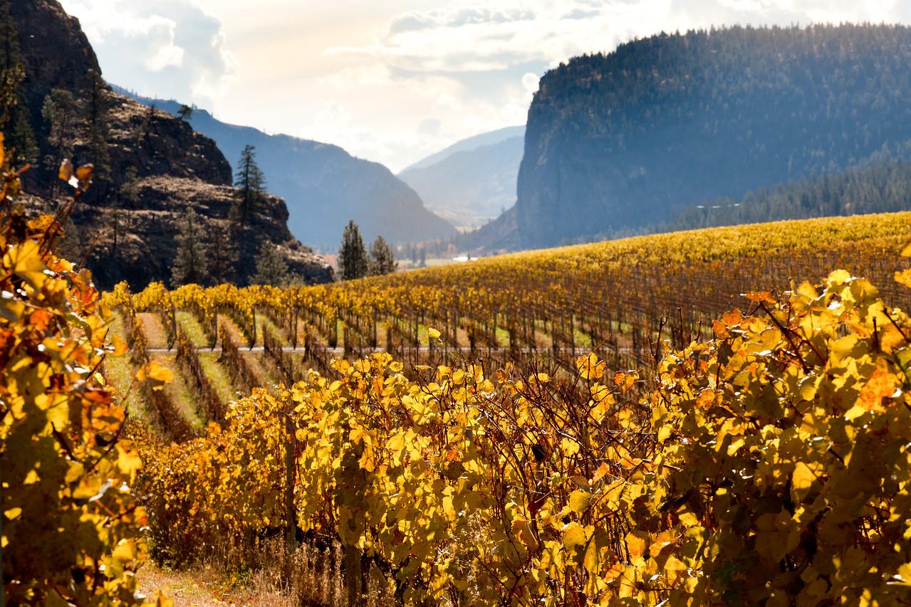 Fall vineyards near Oliver.