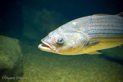 Aquarium (10 of 36)