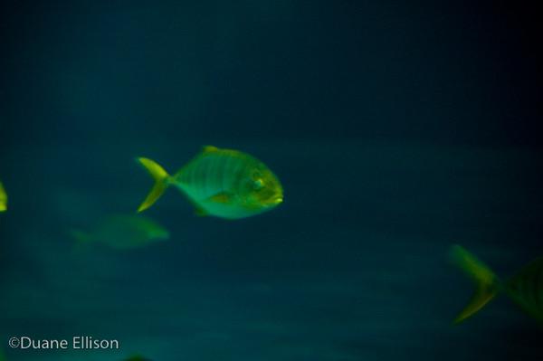 <b>Aquarium (24 of 36)</b><br>