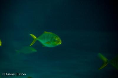 Aquarium (24 of 36)