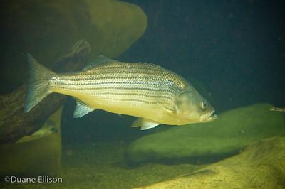 Aquarium (8 of 36)