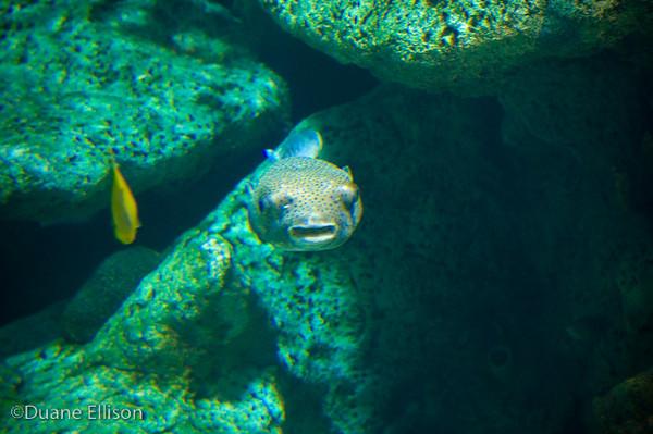 <b>Aquarium (29 of 36)</b><br>