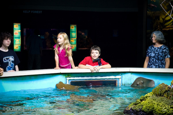 <b>Aquarium (17 of 36)</b><br>