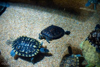Aquarium (4 of 36)