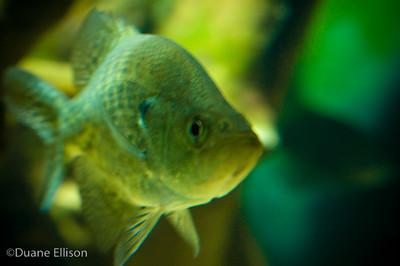 Aquarium (13 of 36)