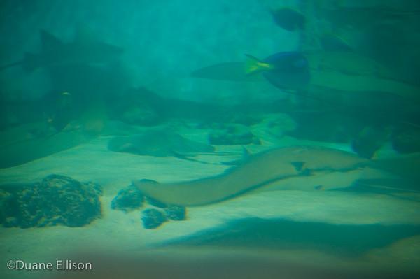 <b>Aquarium (19 of 36)</b><br>