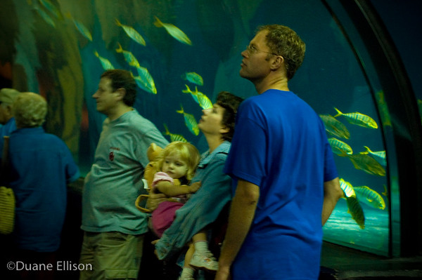 <b>Aquarium (23 of 36)</b><br>