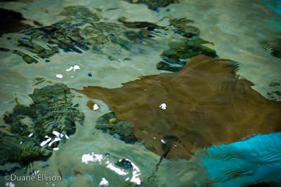 Aquarium (15 of 36)