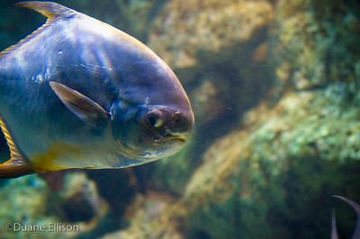 Aquarium (28 of 36)