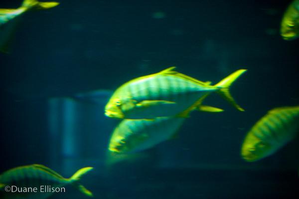 <b>Aquarium (22 of 36)</b><br>