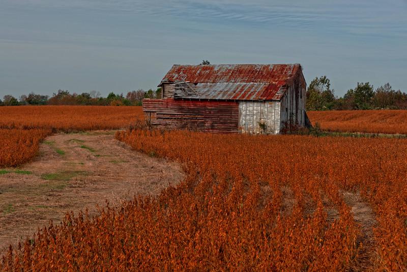 Barn in Soybean Field - Halifax County
