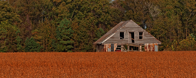 Soybean  Field - Hwy 125 Martin County
