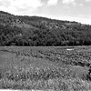 Another part of Joe and Vernie Von Arx's farm by Hokah.  Joe's lake bottom fields and Mount Tom in background.