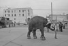 ELEPHANT-#3-YES-147kb-WEB-