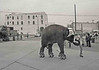 Elephant on a foggy morn, 1981. <br /> Windward Ave & the St Charles Hotel <br /> in background.