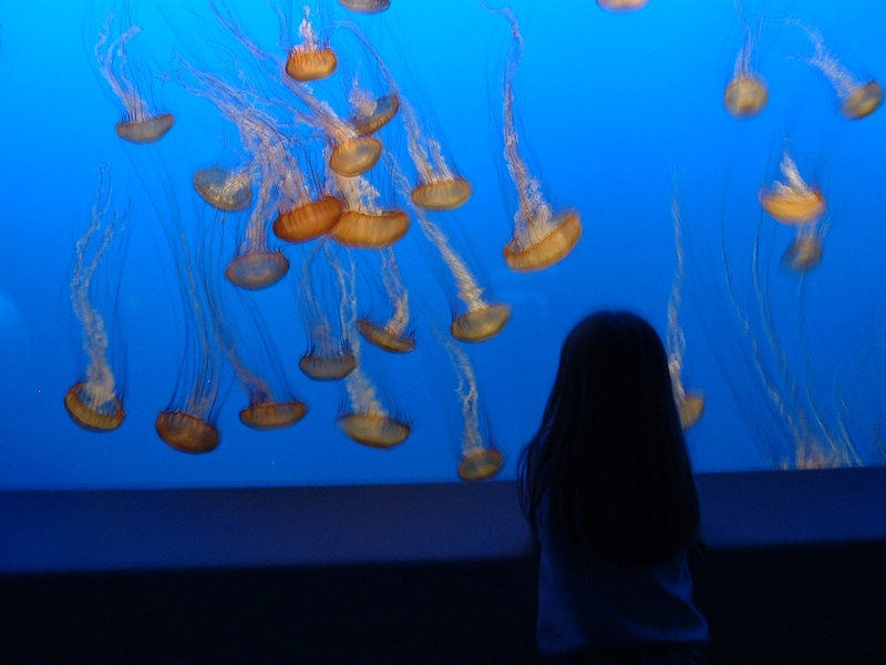 This is April at the Monterey Bay Aquarium, mezmerized by the jellyfish exhibit.