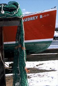 Audrey B-Velvia  OM2  Tam 80-200/2.8