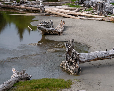 Driftwood Logs, Kalaloch Creek