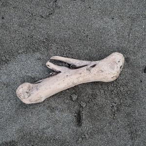 Driftwood, Kalaloch Beach