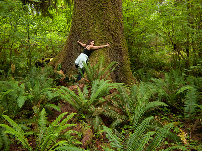 Vicki hugging a Sitka spruce in the Hoh rain forest, Olympic National Park, Washington, 2011.