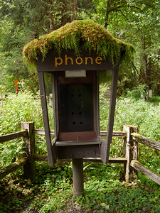 Pay phone booth (minus the phone...) in the Hoh rain forest, Olympic National Park.