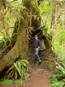Bill and a Sitka spruce in the Hoh rain forest, Olympic National Park, Washington.
