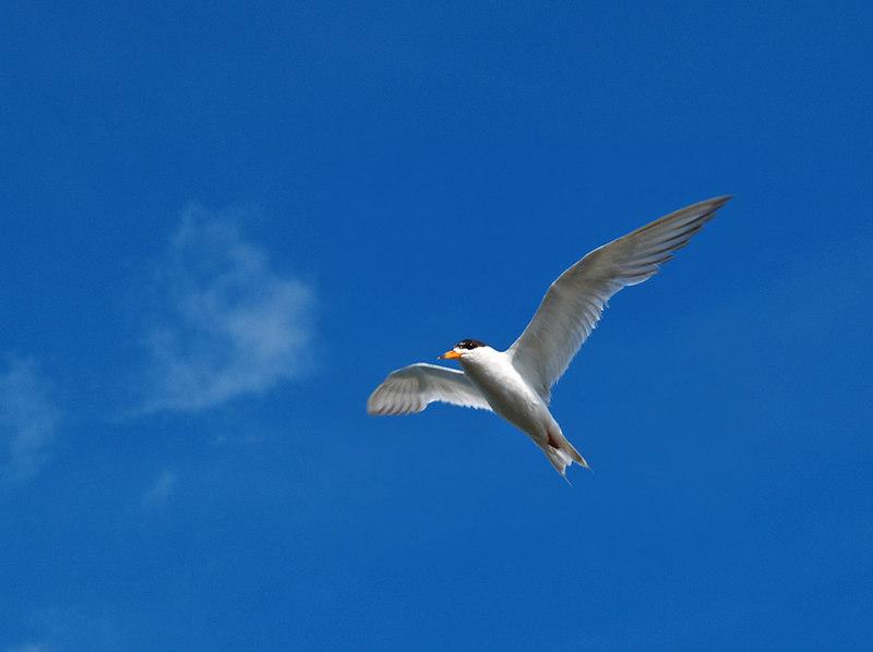 Tern Ocean City