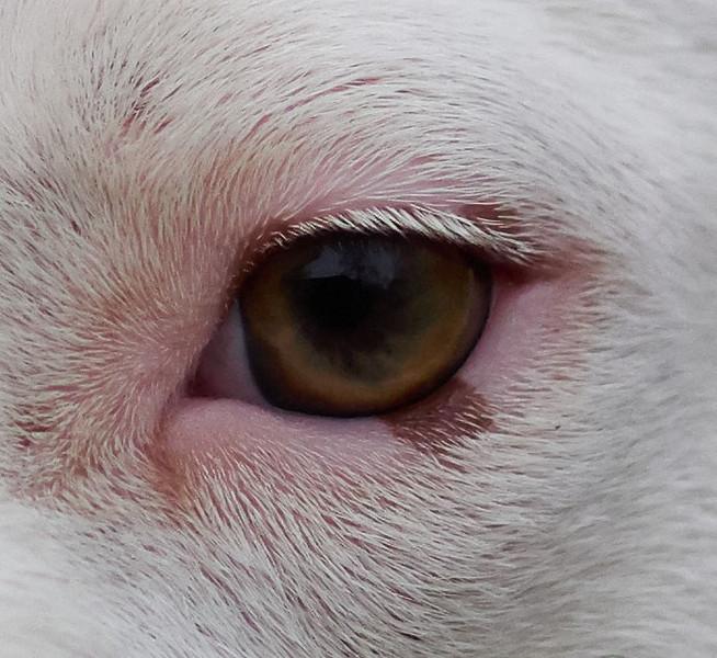 Capture One - 100% Crop of Roxies Eye