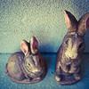 Better Bunnies