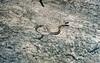 54 Pretty Snake
