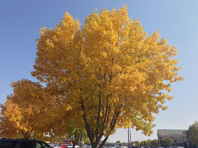 Yes, I missed a couple days already. Here's a yellow tree.