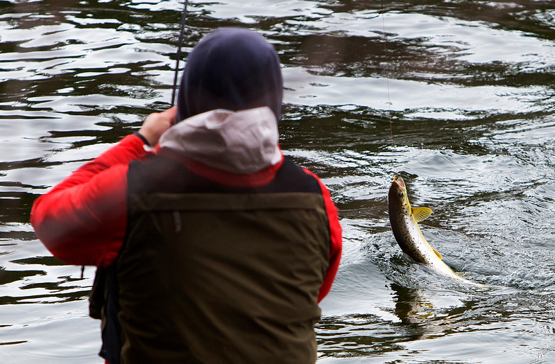 GRAND LAKE STREAM, Maine -- 04/01/2017 -- An angler reels in a landlocked salmon at Grand Lake Stream during opening day of open water fishing season in Grand Lake Stream Saturday. Ashley L. Conti   BDN