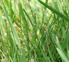 if you look close, you can see a little tiny spider on the a blade of grass, very cool! he was teeny tiny