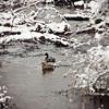 Winter Creek-001