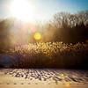 Sunshine Pond-001