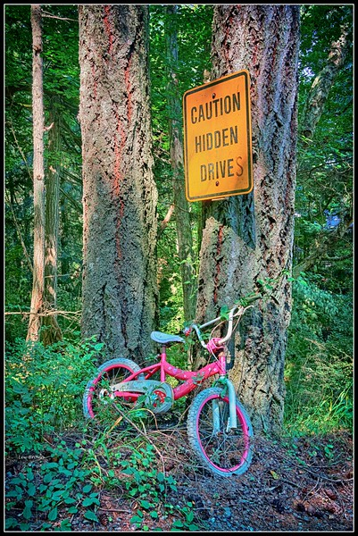 Caution Sign on Enchanted Forest Road