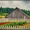 """Painted Barn"" built in 1905"