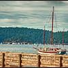 Harbor on West Sound.  Morning Regatta.