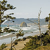 Haystack Rock framed with wind blown pines.
