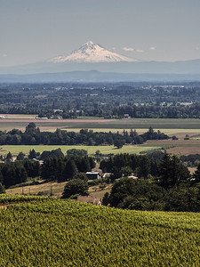 The Willamette Valley and Mt. Hood from the Brokks winery, Amity, Oregon.