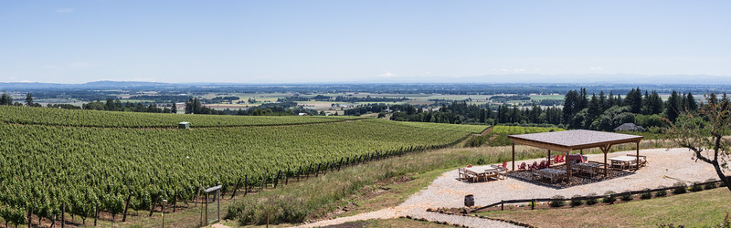The Brooks winery, Amity, Oregon.