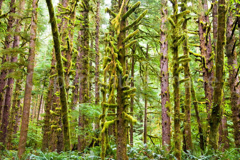 Forest in Ecola State Park on the Oregon Coast